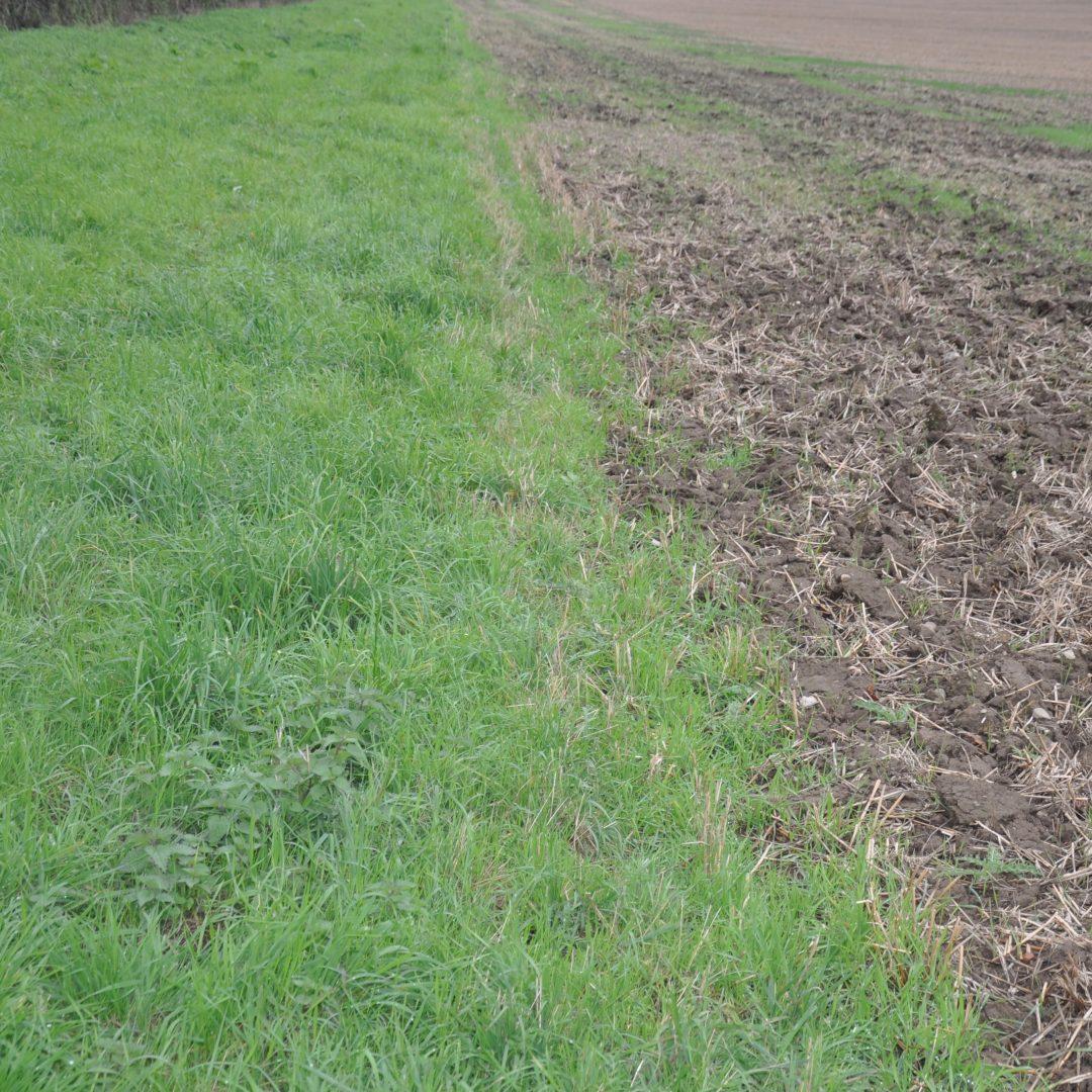 Grassy field margin SQUARE