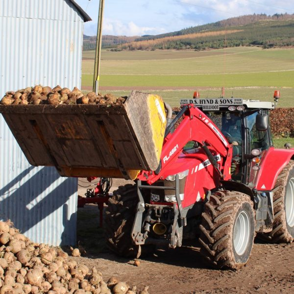 Turnip lifting (2) SQUARE