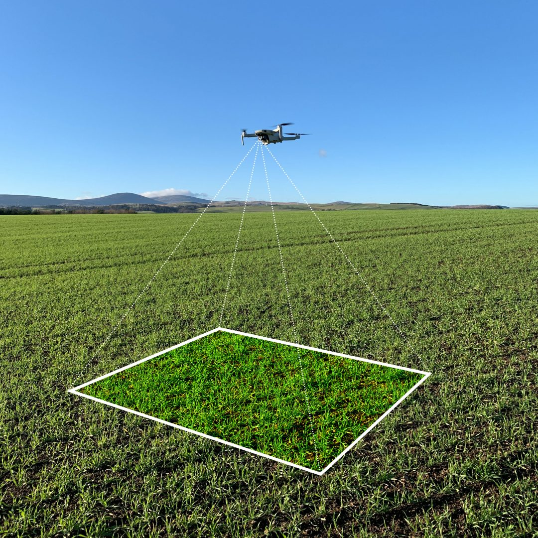 Drone scouting a field